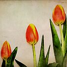 Tulips by Robert Worth