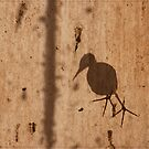Bird on the Roof by Chris Cohen