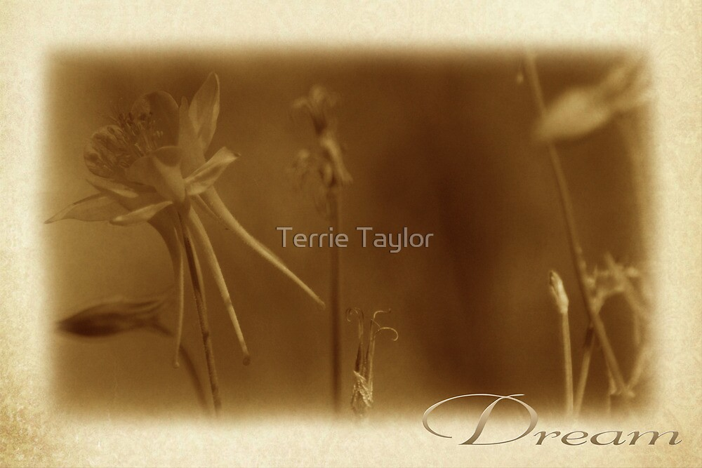 Dream A Little Dream by Terrie Taylor