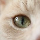 Graham's Eye by Astrid Ewing Photography