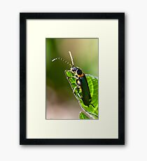 Soldier Beetle. Framed Print