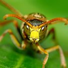 Paper Wasp by Gabrielle  Lees