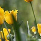 Spotted in the Crowd - Yellow Tulip by Marilyn Brown