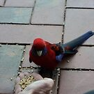 Feeding the Crimson Rosella by Initially NO