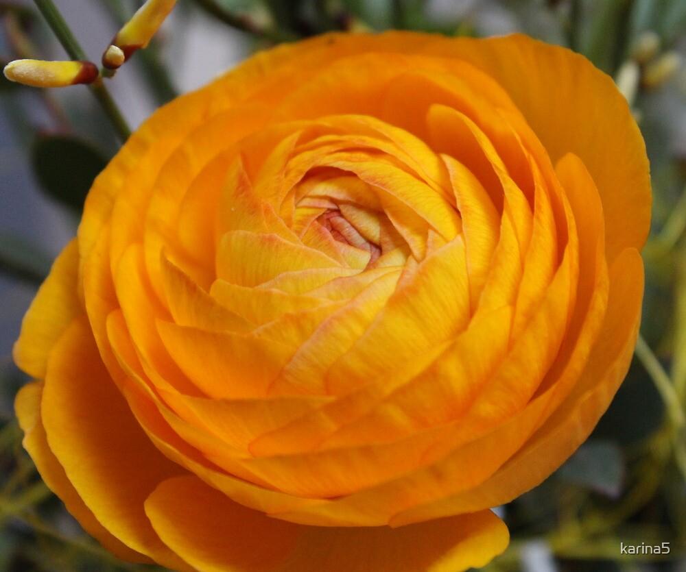 Ranunculus asiaticus by karina5