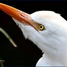 Egret ! by Greg Parfitt