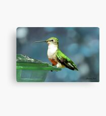 Tiny Backyard Visitor ~ Hummingbird Canvas Print