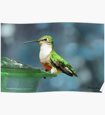 Tiny Backyard Visitor ~ Hummingbird Poster