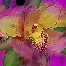 Rainbow Orchid  by Don Wright