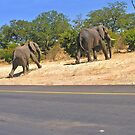 Why did the elephant cross the road? by almaalice