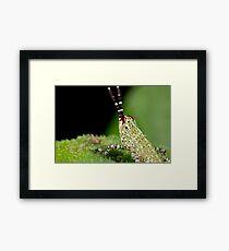 Mini Hopper Framed Print