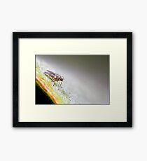 Fly super model Framed Print