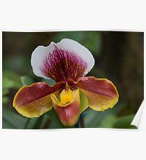 Orchidea Poster