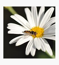 The Power of Simplicity ~ Photographic Print