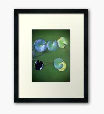 Pond Pac-man Framed Print