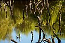 Dance of the Mangroves by Extraordinary Light