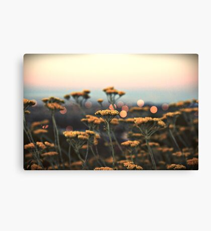 drops of gold Canvas Print