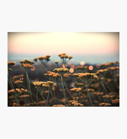 drops of gold Photographic Print