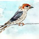 My swallows are back! by Maree Clarkson