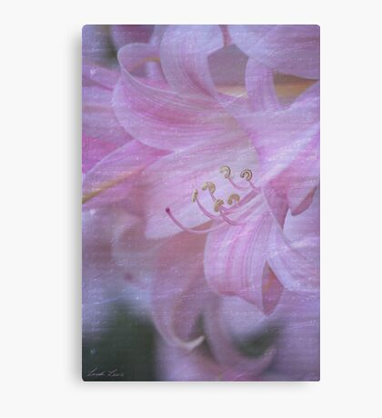 Rhapsody in Pink Canvas Print