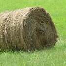 Hay bale on a sunny day by Taschja Hattingh