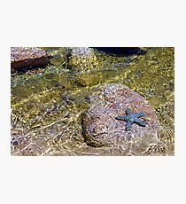 Faux starfish Photographic Print