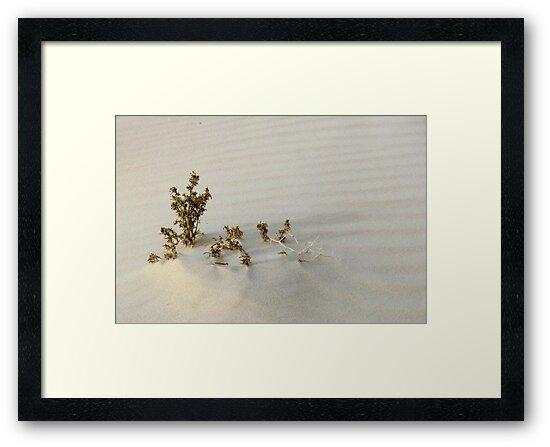 Monahans White Sand Hills ~ Desert Life by Carla Jensen
