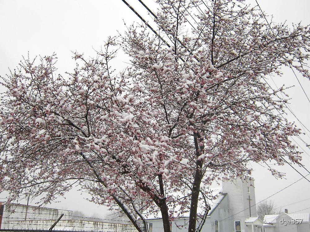 Feb. 19 2012 Snowstorm 10 by dge357