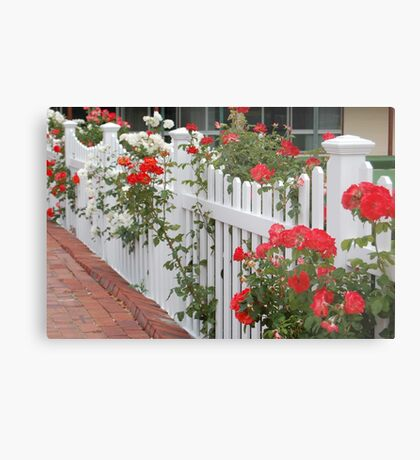 Roses On The Front Fence. Metal Print