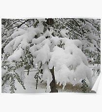 Feb. 19 2012 Snowstorm 23 Poster