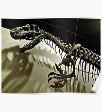 Raptor Skeleton and Scary Shadows Poster