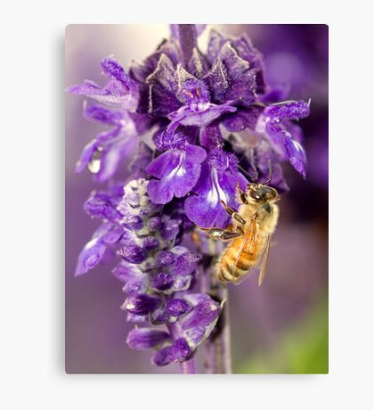 Purple Is My Favorite Color - Its BEEutiful Canvas Print