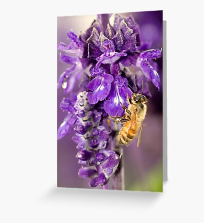 Purple Is My Favorite Color - Its BEEutiful Greeting Card