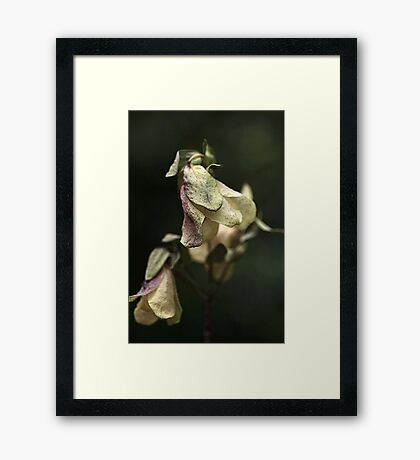 Dried Beauty Framed Print