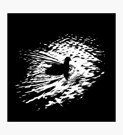 Coot, silhouette as swimming on a pond Photographic Print