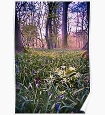 Salcey Forest in Spring Poster