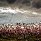 Spring...Soon by Joseph Fronteras