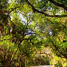 Live Oak and Palm Canopy, Sarasota 2012 by Frank Bibbins