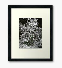 Feb. 19 2012 Snowstorm 36 Framed Print