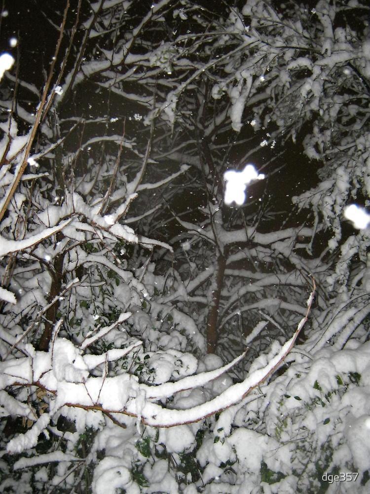 Feb. 19 2012 Snowstorm 37 by dge357
