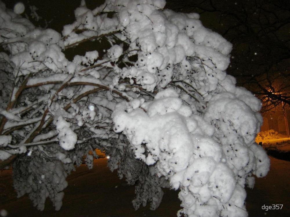 Feb. 19 2012 Snowstorm 39 by dge357