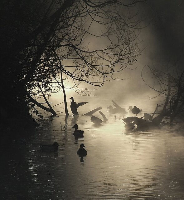 Ducks in the Mist by Helen J Cherry