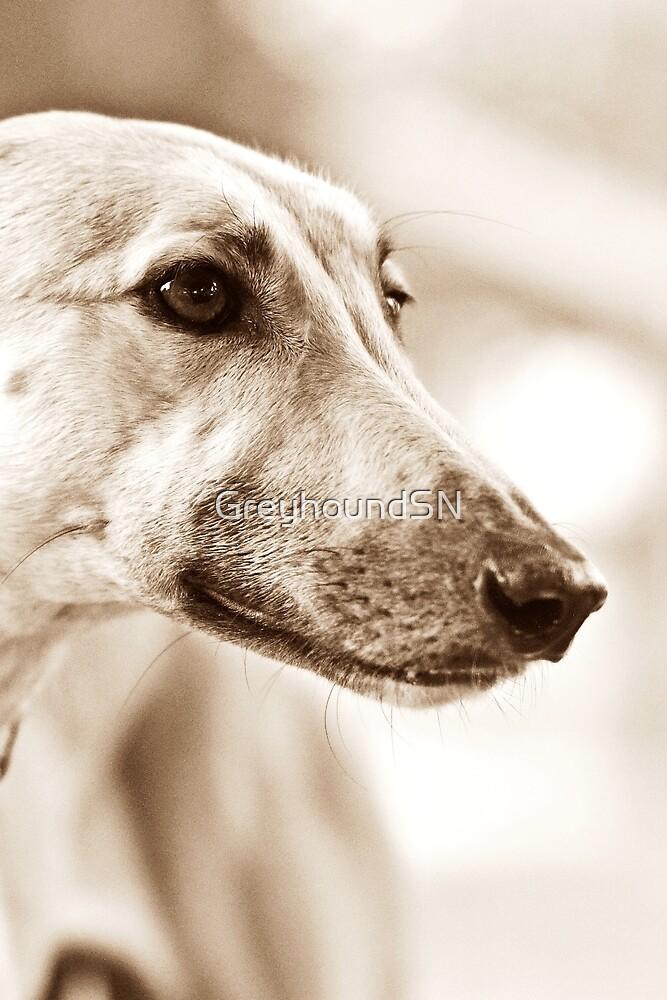 Gemma by GreyhoundSN