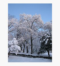 Feb. 19 2012 Snowstorm 77 Photographic Print