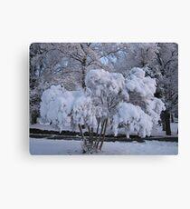 Feb. 19 2012 Snowstorm 79 Canvas Print
