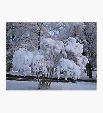 Feb. 19 2012 Snowstorm 79 Photographic Print