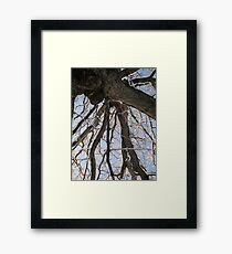 Feb. 19 2012 Snowstorm 104 Framed Print