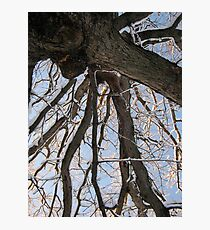 Feb. 19 2012 Snowstorm 104 Photographic Print