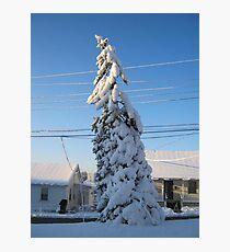 Feb. 19 2012 Snowstorm 109 Photographic Print