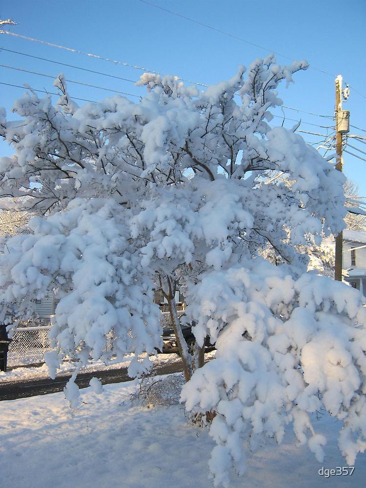 Feb. 19 2012 Snowstorm 120 by dge357